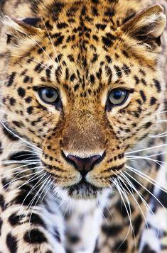 nature photography | photo:wildlife