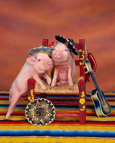 Piggies...