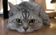 All the adorable reasons that cats have our hearts