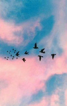 Color, aves, naturaleza