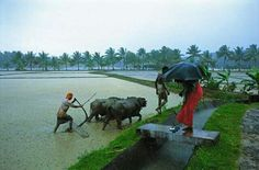 Indian farmers can't take rest during rains