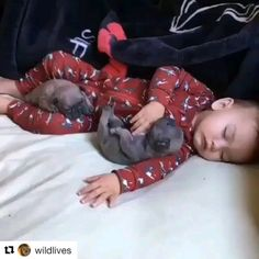 Things that make you go AWW! Like puppies, bunnies, babies, and so on. A place for really cute pictures and videos! Cute Baby Animals, Funny Animals, Bebe Video, Tiny Puppies, Puppy Care, Funny Cute, Beautiful Babies, Cute Kids, Fur Babies