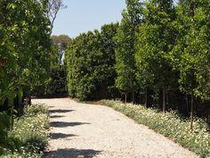 Paul Bangay in Sydney | GardenDrum