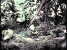 POGLES WOOD Honey Bees 21 April 1966 My first memory of telly