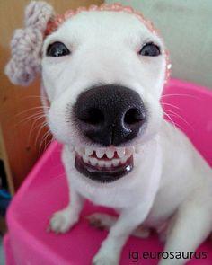 Smile! Eurosauros