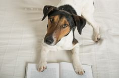 Dog reading a book Travel Around, Books To Read, Reading, Dogs, Nature, Animals, Animales, Animaux, Word Reading