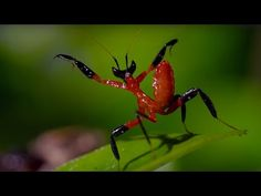 Kung Fu Mantis vs Jumping Spider is very educational with a surprise twist at the end. - Real Funny
