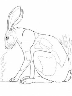 Desert Hare Coloring Page - Free Coloring Pages Online Bunny Coloring Pages, Pattern Coloring Pages, Free Printable Coloring Pages, Colouring Pages, Free Coloring, Freehand Machine Embroidery, Free Motion Embroidery, Hare Pictures, Rabbit Pictures