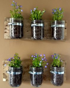 Indoor herb garden  (Mason Jar Wall Hanger Planter. $20.00, via Etsy.)