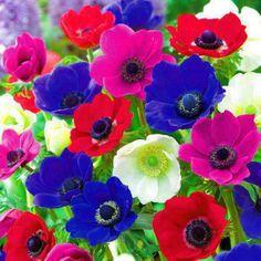Renkli Çiçekler