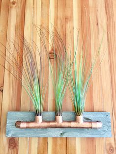 Air Plant -:- Tillandsia Juncea - Housewarming Succulent  Desk Decor Tiny Garden  Miniature Planter Steampunk Modern Vintage Chic Industrial by AdoreYouHome on Etsy
