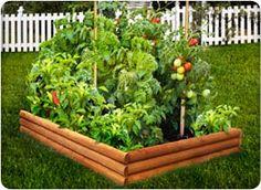 Spring's backyard vegtable garden