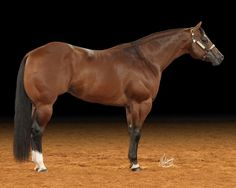 PTMA Star Kid, halter horse--- look at those muscles