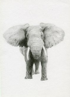 Elephant pencil drawing by Allen D. Aramide
