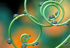 curly, swirly green #spirals #droplets
