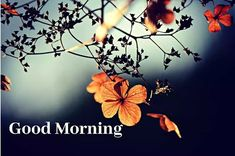 A collection of Beautiful Good Morning Images, beautiful good morning pictures, whatsapp good morning images and quotes. Sweet Good Morning Images, Morning Images In Hindi, Morning Pictures, Photomontage, Restaurant Design, Happy Good Friday, Saint Aubin, Montage Photo, Flower Branch