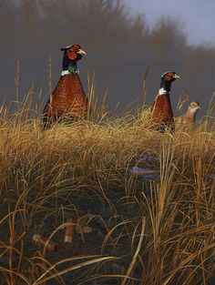 """""""On Alert"""" - Pheasants -                   painting by Scot Storm"""