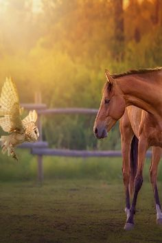 Encounter. Owl and horse. Fancy photoshop work!cavalos cachorros bichos animais pets amor amores vida lindezas pigs porcos boo monokuro boo