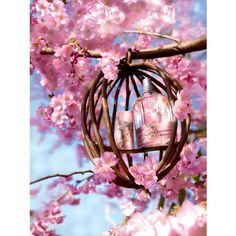 春の訪れを告げる、ロクシタン「ワイルドチェリーツリー」