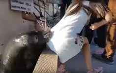 Menina puxada por leão-marinho no Canadá tem tratamento preventivo contra infecção rara