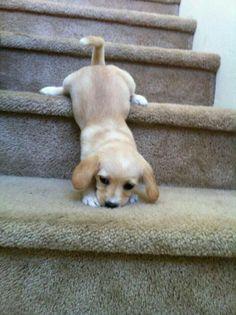 I am lazy.