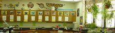 Science Teaching Ideas