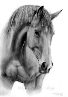 Muscle tension, Neck extension, Head set high, Liquid eye, Perfect picture of course, Of a beautiful horse. © Caro Ness 2015 Drawing: света исаева