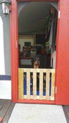 And I also did a dog gate out of a old pallet :-) And I don't have any experiance in carpeting.