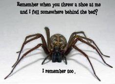 spiders - Buscar con Google