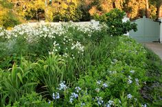 An old garden belonging to a house undergoing a renovation, and similarly in need of an update. The revamp of the garden had much to do about connecting the hou Garden Types, Public Garden, Cape Town, Architects, Entrance, Beds, Swimming Pools, Pergola, Mary