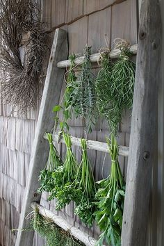 Bohemian Pages : Drying herbs .