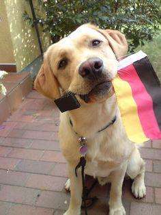 puppy hund