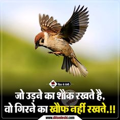 30 ideas birthday quotes in hindi for brother Hindi Quotes Images, Hindi Quotes On Life, Wisdom Quotes, Life Quotes, Desi Quotes, Passion Quotes, Status Quotes, Fact Quotes, Nature Quotes