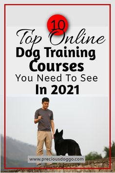 Dog training online. Have a great training sesion from the comfort of your liveing room. #dogtraining #onlinetraining #onlineschool Puppy Training Classes, Online Dog Training, Dog Training Courses, Training Your Puppy, Dog Training Tips, Animal Antics, Dog Travel, Old Dogs, New Tricks