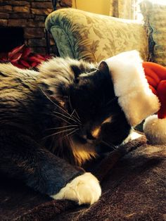 Merry Christmas to you all! Merry Christmas To You, Norwegian Forest Cat, Cairn Terrier, Happy, Animals, Gatos, Animales, Cairn Terriers, Animaux
