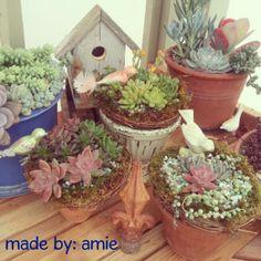 Succulent bird nests