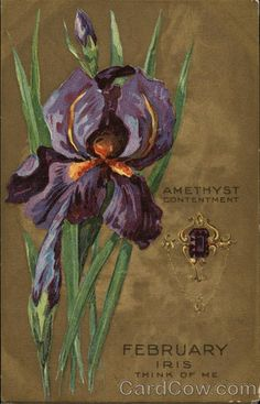 February, Iris, Think of Me Amethyst, Contentment