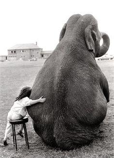 Elephantia
