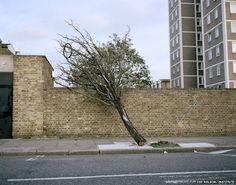 Broken Tree - Hackney, London