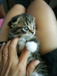 Khluy is So sweet belove kitty photo:niki