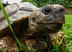 Más tamaños   P1060796   Flickr: ¡Intercambio de fotos!