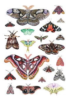 Illustration Now ( Atlas Moth, Butterfly Drawing, Bugs And Insects, Art Inspo, Creative, Body Art, Illustration Art, Artsy, Collage