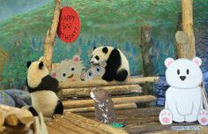 Birthday celebration held for giant panda cubs at Toronto Zoo
