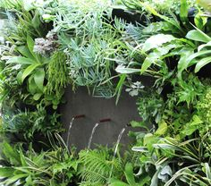 The PAPS Vertical Garden Kit Is A Great Way To Grow Plants In A Small  Space. The Plants Grow Up And Out From The Wall, Allowing More Floor Space  U2013 The ...