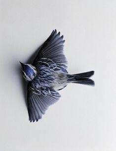 obrie vtáky Gay