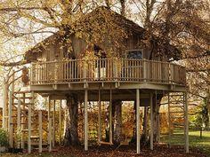 Beautiful Tree Houses