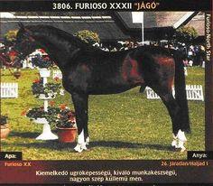 3806 - Furioso XX-102 (XXXII.tm) Jágó