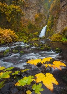 Wahclella Falls, Columbia River Gorge National Scenic Area, Bonneville, Multnomah County, Oregon.  Photo: Chip Phillips via Flickr