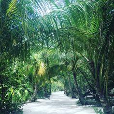 palmenallee malediven