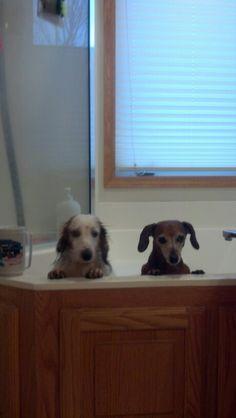 Doxie bath time